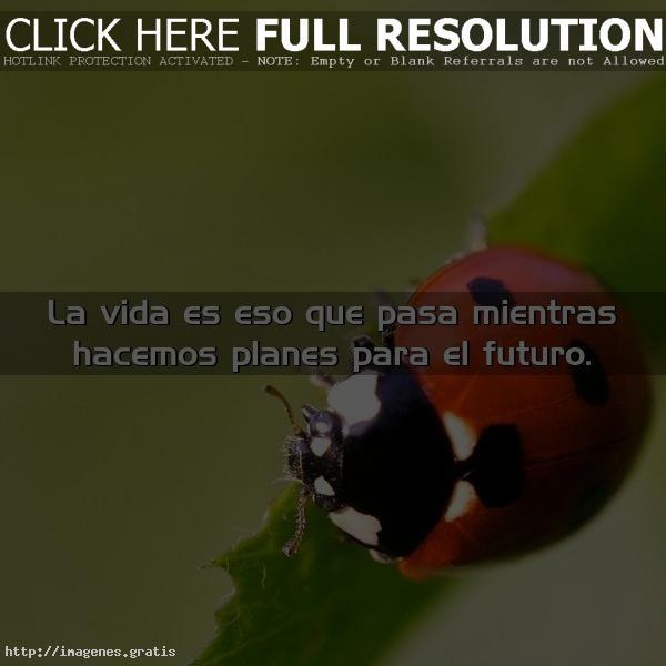 Vive la vida que es mejor para ti!