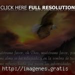 Predicaciones de Dios