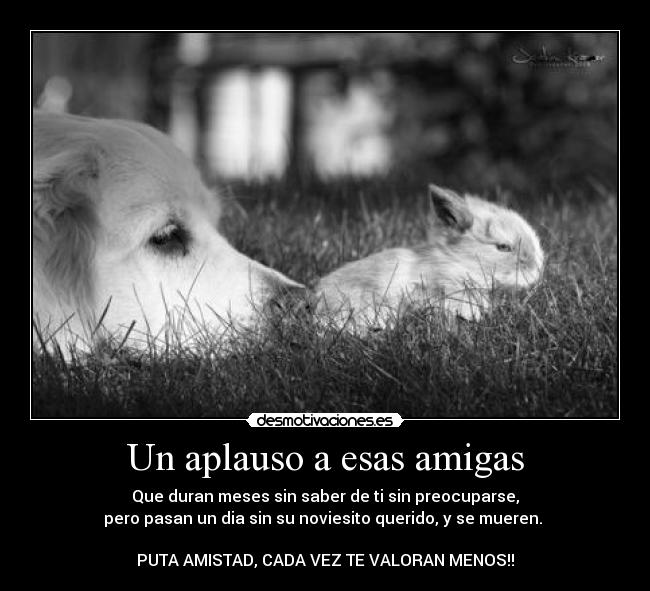 Frases De Amistades Falsas Un Aplauso A Esas Amigas