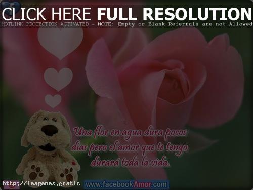 Frases De Amor Y Amistad Una Flor Imagenes Gratis