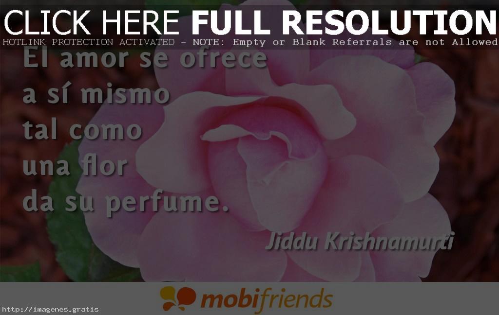 Frases Locas Amor Demostrar Amas Verdad 4 Imagenes Gratis