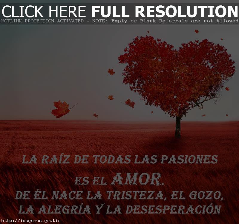 Consuelos de amor en frases para dedicar a tu amada o amado