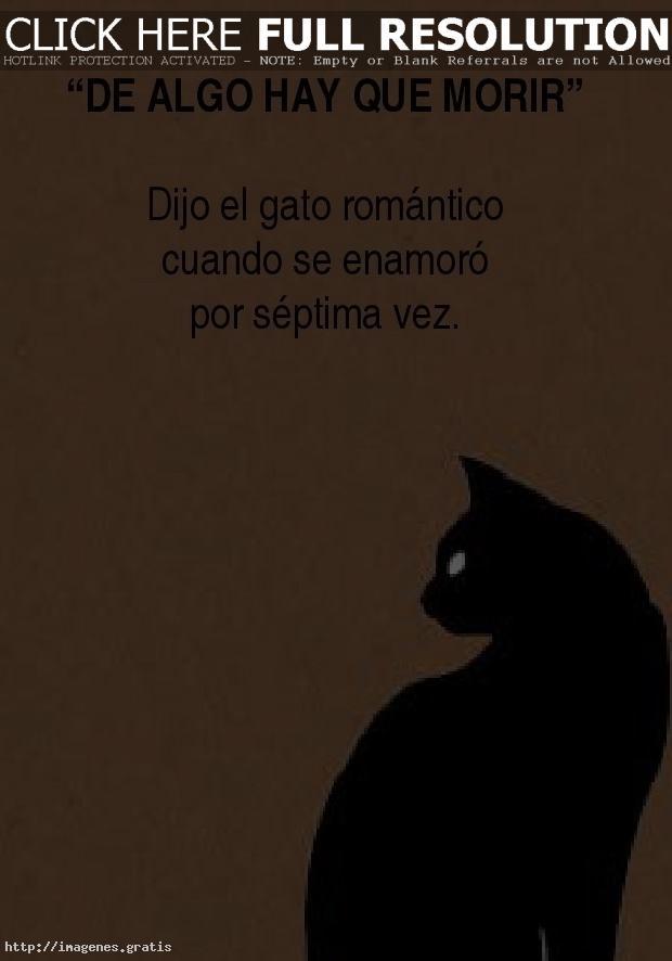 Desamor: gato romantico